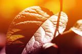 Colored leaf background - 115009783