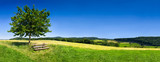 Grüne Landschaft im Sommer als Hintergrund - 115090966