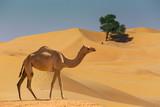 Desert landscape with camel - 115092313