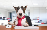 Fototapety Business dog at work