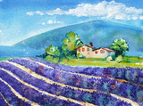 Beautiful blooming lavender fields with house in distance