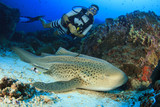 Scuba diver and Leopard Shark - 115137706