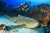 Scuba diver and Leopard Shark - 115137706