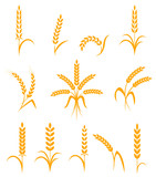 Wheat ears or rice icons set. Agricultural symbols isolated on white background. - 115137992