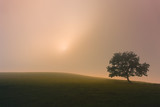 lonely tree with dreamy light