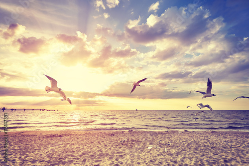 Vintage toned beach with flying birds at sunset