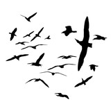 Black on white silhouettes. Flock of sea gull birds.