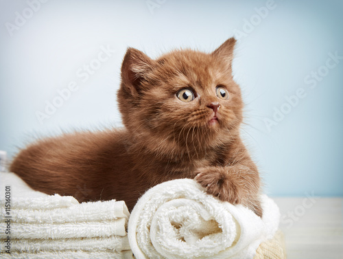 obraz PCV kitten and towels