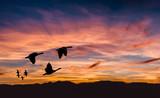 Beautiful landscape on sunset or sunrise with flying birds natur