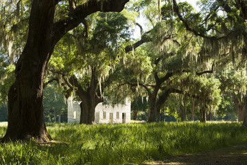 American deep south with live oaks and ruins in South Carolina