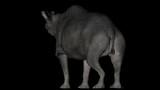 Animation of dinosaur Brontotherium gyrating 360 degree on black background