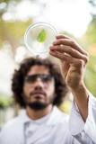 Male scientist inspecting leaf on petri dish