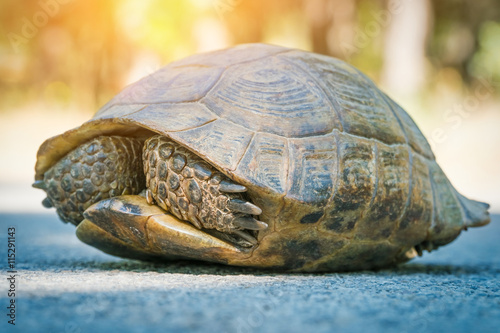 Fotobehang Schildpad turtle hiding in shell on the road