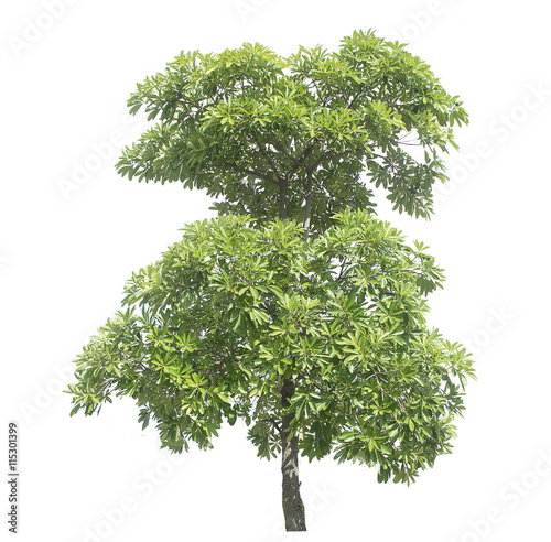 Poster Tree isolated on white background