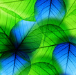 Macro green and blue leaf
