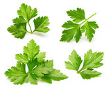 Parsley herb isolated - 115308921