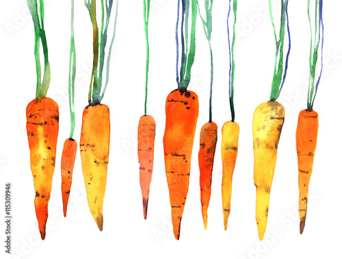 watercolor hand painted carrot плакат