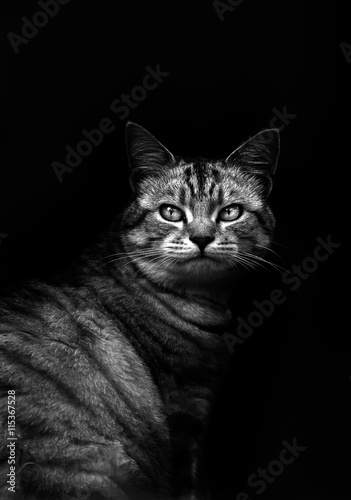 Cat in black and white with a dark background