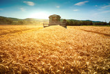 Harvester machine to harvest wheat field working - 115377783