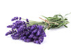 Quadro Lavender flowers bunch