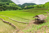 Rice seedlings were grown in the farmland