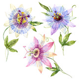 Watercolor passion flower - 115431715