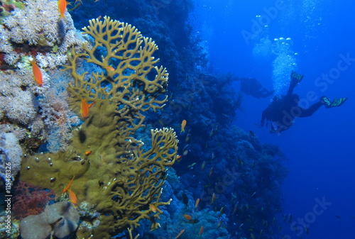 Along the wall at Habili Ali, St John's reefs, Red Sea, Egypt