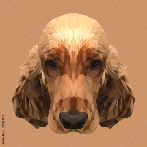 Cocker Spaniel Dog animal low poly design. Triangle vector illustration. © shekularaz
