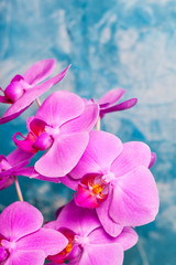 Orchids bloom on blue background. Pink color. Spa card. © zabosan