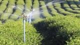 Water sprinkler on organic tea farm