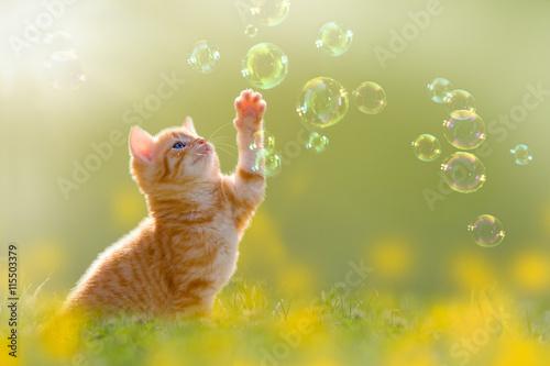 Poster junges Kätzchen spielt mit Seifenblasen, bubbles