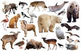 europe animals isolated
