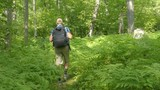 Man walking in forest . Hiking trekking through dense nature on Russia. Healthy young sporty living active lifestyle.