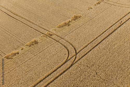 Poster Champ de blé