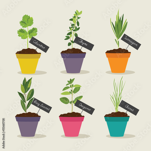 Herb garden with pots of herbs set 2, vector illustration