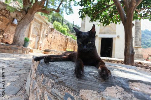 Black cat near the stone Greek church. Island Crete. Greece