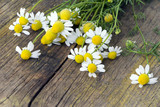 Echte Kamille auf Holzuntergrund, Heilpflanze
