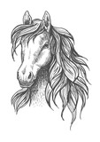 Young horse head sketch with wavy mane - 115706915