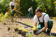 Gardener planting flowers taken from the pot