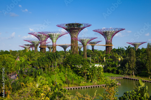 Daytime view of the Supertree grove at Gardens By The Bay, Singa Poster