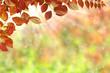 Herbst 127