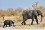 Elefantenmutter (Loxodonta africana) mit Kind im Etosha Nationalpark
