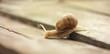 Snail website banner