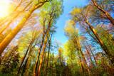 Farbenfrohe Szene im Wald, die Baumwipfel werden von der Sonne beleuchtet