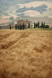 Summer landscape in Tuscany - 115831537