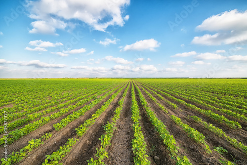 Vegetable Field