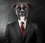 cane vestito da uomo d