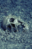 Real human skull as crime scene, color manipulated, narrow focus