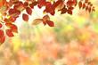 Herbst 126
