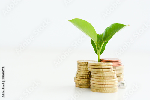 Profitable investment of money concept with isolated plant and coins